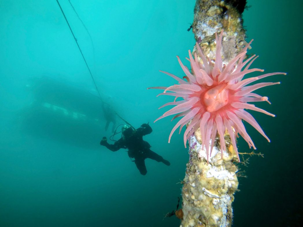 Diving the HMCS Columbia